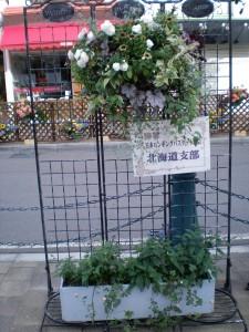 2014函館花フェスタ5